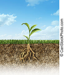 שתול, לכלך, חלק, עובר, אמצע, ירוק, roots., דשא, שלו