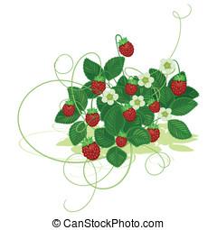 תות שדה פראי, עץ
