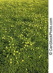 תחום, ירוק, צהוב