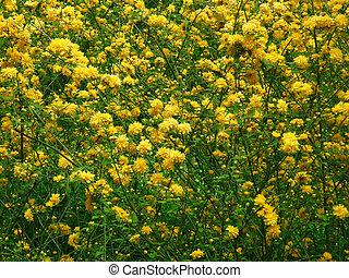 תחום, פרחים