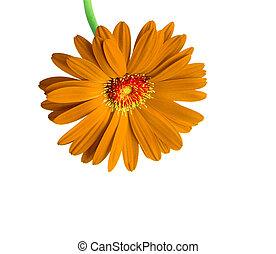תפוז, פרח לבן, הפרד, רקע