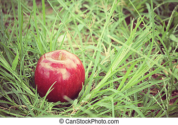 תפוח עץ