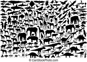 תרשימים, בעל חיים