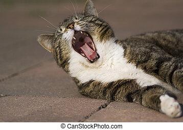 あくびする, cat.