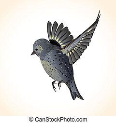 あなたの, かわいい, デザイン, 隔離された, 鳥