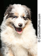 あなた, 子犬, 微笑, 素晴らしい