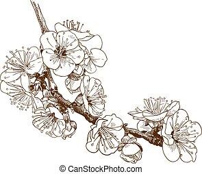 ∥あるいは∥, イラスト, sakura, 彫版, 桜