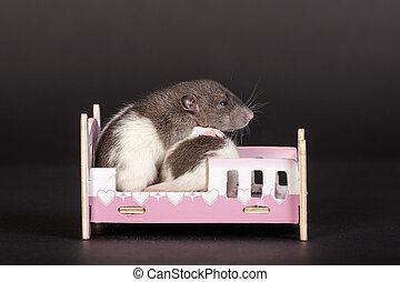 おもちゃ, ネズミ, ベッド