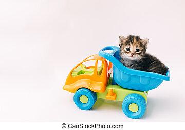 おもちゃ 車, 背景, 子ネコ, トラック, モデル, 白, 青, 中
