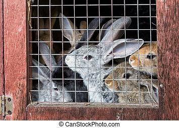 おり, ウサギ