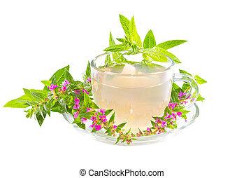 お茶, ∥あるいは∥, 注入, の, 紫色, lythrum