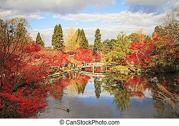 かえで, 日本語, 秋, 庭
