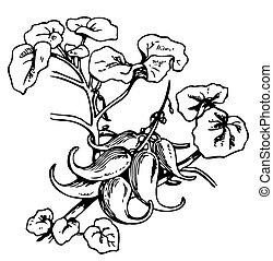 かぎつめ, 植物, devil's