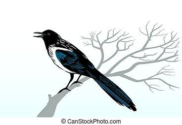 かささぎ, 鳥