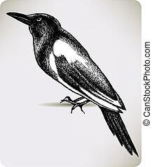 かささぎ, hand-drawing., ベクトル, 鳥, illustration.