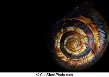 かたつむりの貝, らせん状に動きなさい, 黒い背景