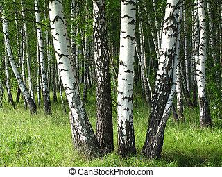 かばツリー