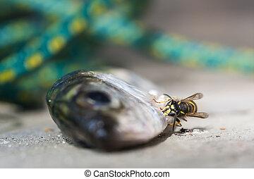 かむこと, fish, スズメバチ, スケール