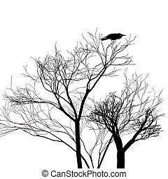 からす, グラフィック, 木