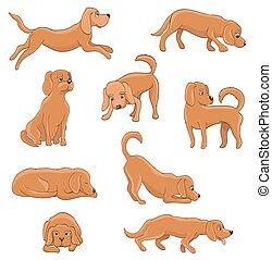 かわいい, あること, モデル, 面白い, ペット, 犬, tired., 漫画, poses., ベクトル, 様々,...