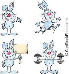 かわいい, ウサギ, セット, 8., コレクション