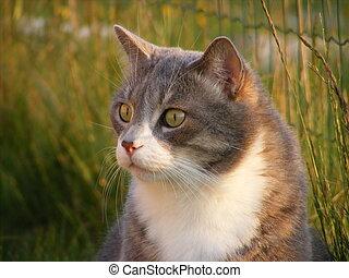 かわいい, グレーの猫