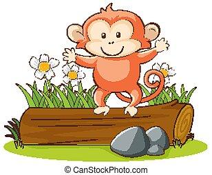 かわいい, サル, 隔離された, 映像