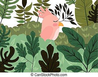 かわいい, ジャングル, 鳥