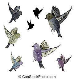 かわいい, セット, 隔離された, 鳥の設計, あなたの