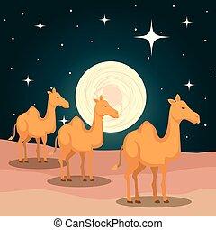 かわいい, ラクダ, 現場, 砂漠