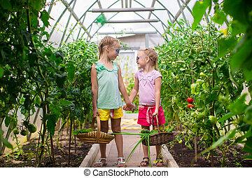 かわいい, 女の子, 収穫, 集めなさい, キュウリ, 温室