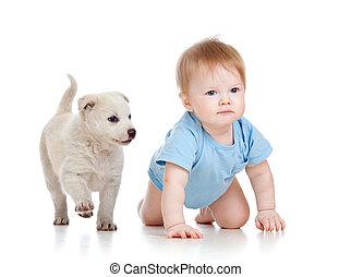 かわいい, 子供司厨員, そして, 犬, 子犬, playin