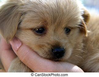 かわいい, 子犬