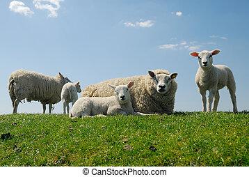 かわいい, 子羊, 彼女, 母