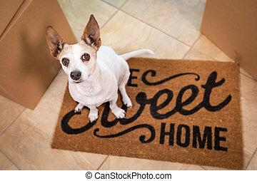 かわいい, 床, 甘い, 箱, 家, モデル, 犬, マット, 歓迎