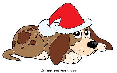かわいい, 犬, 中に, クリスマス, 帽子