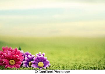 かわいい, 芝生, 花