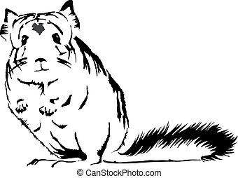 かわいい, 見る, チンチラ, 不思議である, lanigera), (chinchilla