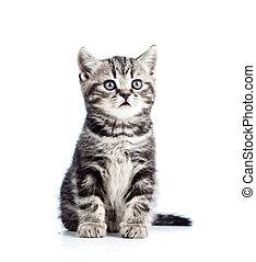 かわいい, 隔離された, ねこ, 黒, 子ネコ, 白
