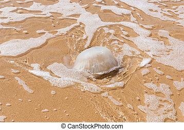 くらげ, 水, 上に, ∥, 砂, 海岸