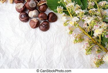 くり毛, ∥で∥, 木, 花, 花, 白