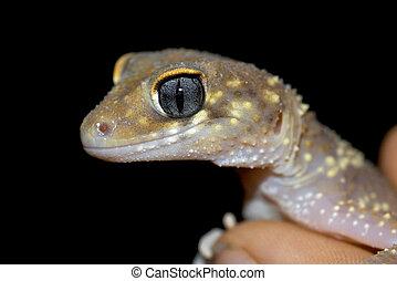 ぐっと近づいて, gecko