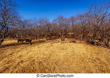 ごまかされる, 背景, 草, 鹿