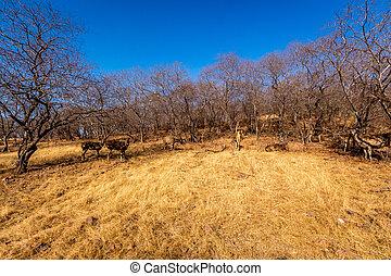 ごまかされる, 草, 風景, 鹿