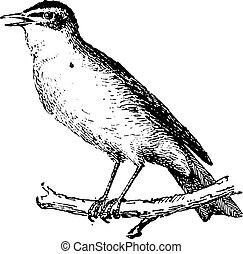 さえずり鳥, engraving., ブランチ, とまった, 型