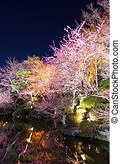 さくらんぼ, 京都, 木, 夜