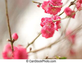 さくらんぼ, 新しい, 花, 中国語, 年