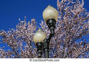 さくらんぼ, 棒, 花, ライト