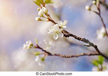 さくらんぼ, 白い花, ブランチ