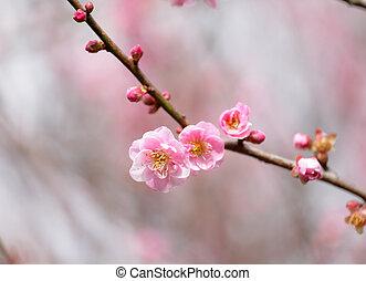 さくらんぼ, 花, 花